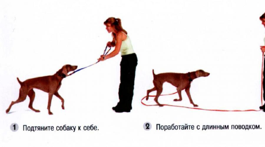 Как научить собаку команде «место!»