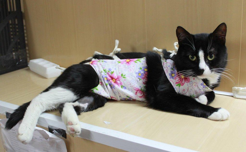 Особенности кормления кошки после стерилизации