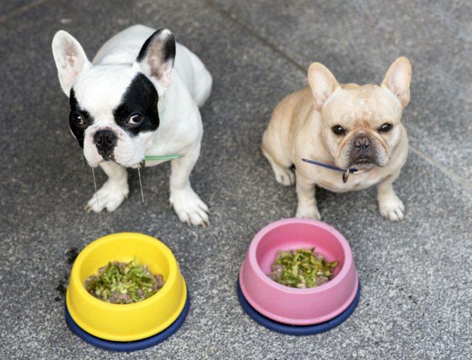 Чем кормить французского бульдога: здоровый рацион и основы питания