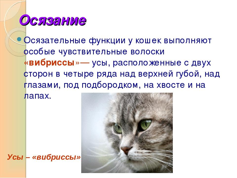 Анатомия кошки: строение тела и органов, интересные факты