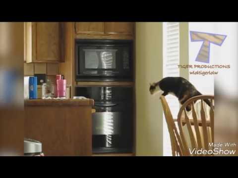 Как отучить кошку или кота лазить по столу: 8 способов