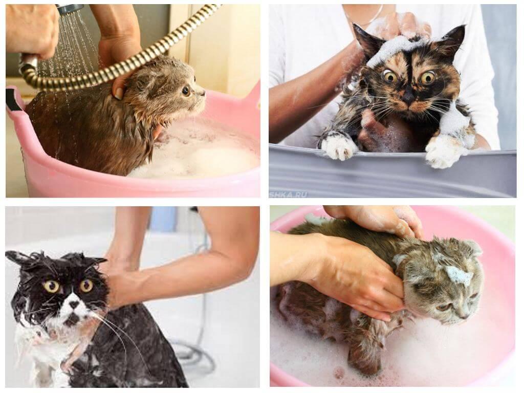 Как мыть кота и мыть ли вообще. почти гамлетовский вопрос
