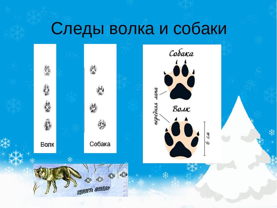 Как выглядят следы собаки на снегу фото