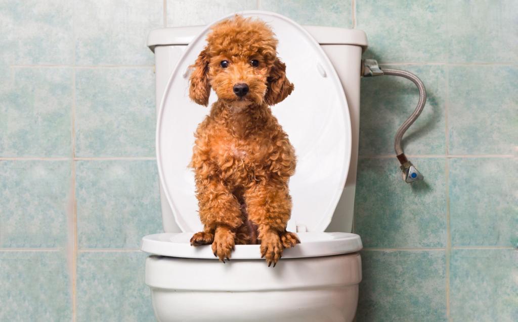 Запор у собаки причины, симптомы, методы лечения