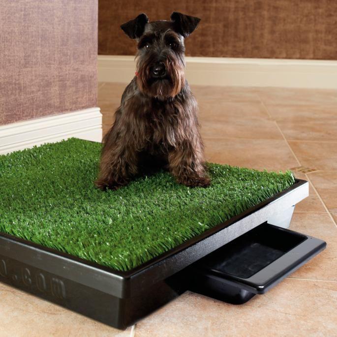 Большие собаки для квартиры: какие крупные породы подходят? милые здоровяки для детей