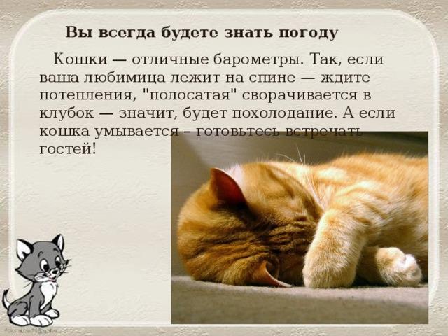 Как определить погоду по кошке: народные приметы