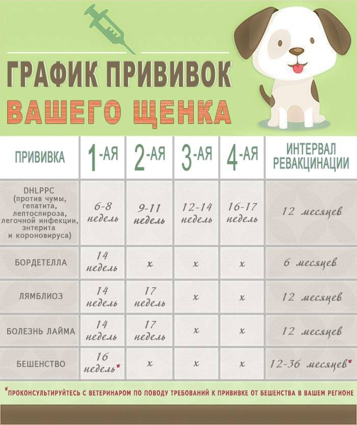 Можно ли гулять со щенком после первой прививки? ветдоктор 24 киев