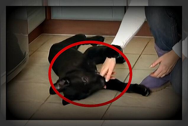 Как отучить собаку кусаться - недопустимые приемы и правильные методы борьбы