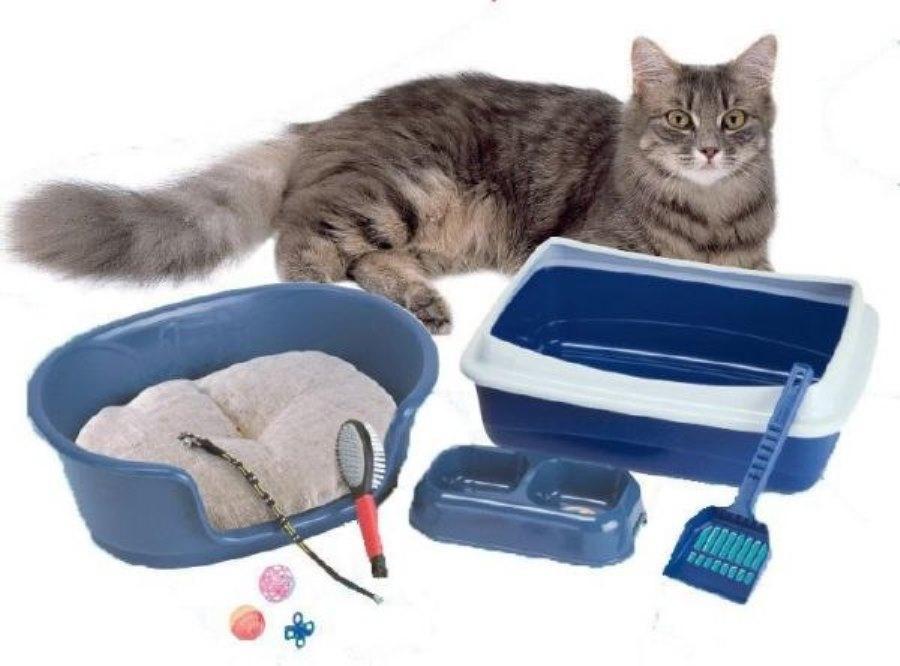 Подобрали котенка с улицы: первые действия без резких движений. когда и зачем нести найденыша к ветеринару, с каких процедур начать, а какие лучше отложить