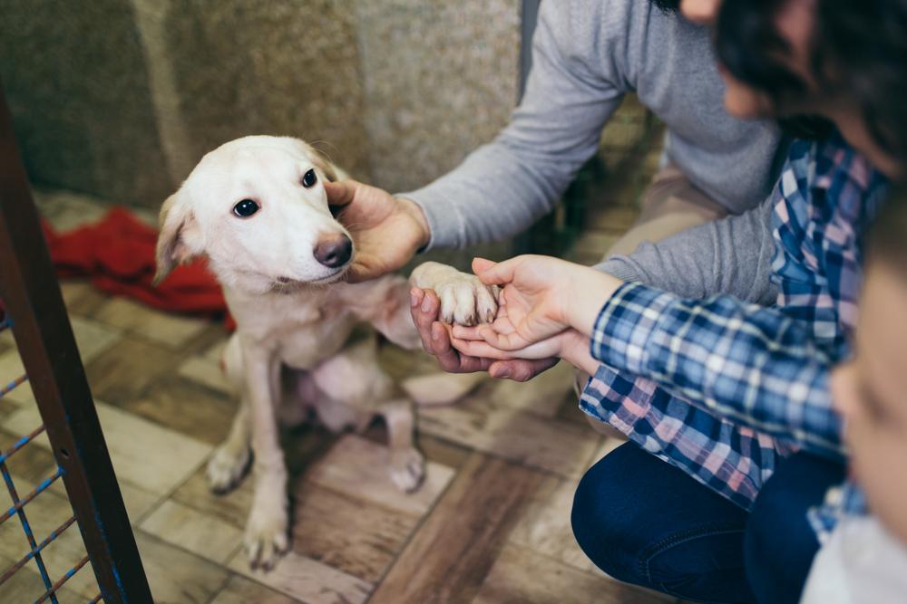 Как взять собаку из приюта — пошаговая инструкция