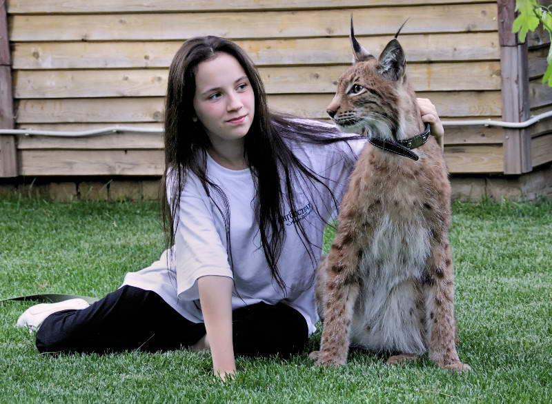 Кошки, похожие на рысь