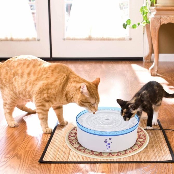 Почему кошка много и часто пьет?