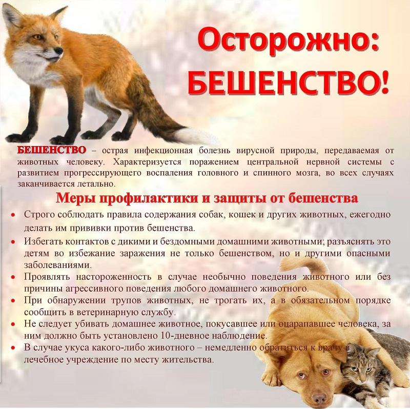Кошки, несущие смерть. чем эти домашние животные опасны для человека   cвободное время   аиф аргументы и факты в беларуси