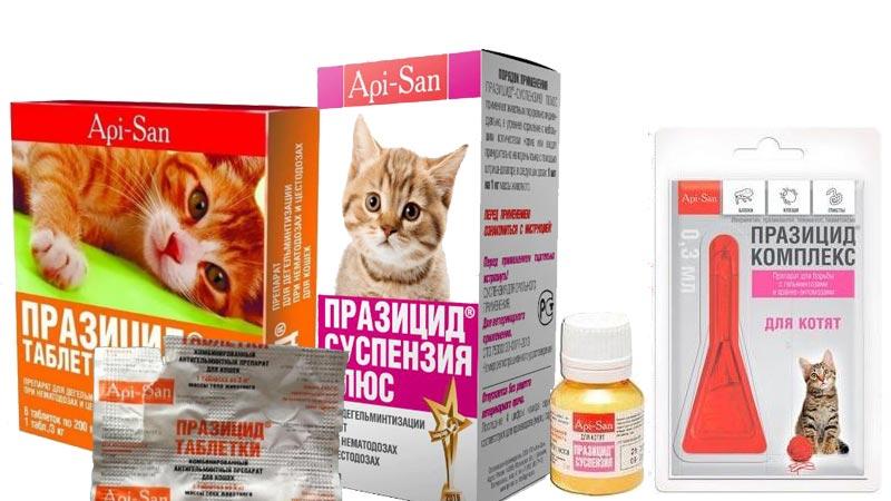 Празицид для кошек: препарат от паразитов