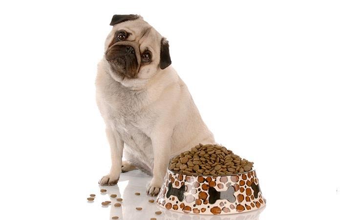 Чем кормить мопса: основные правила и рекомендации