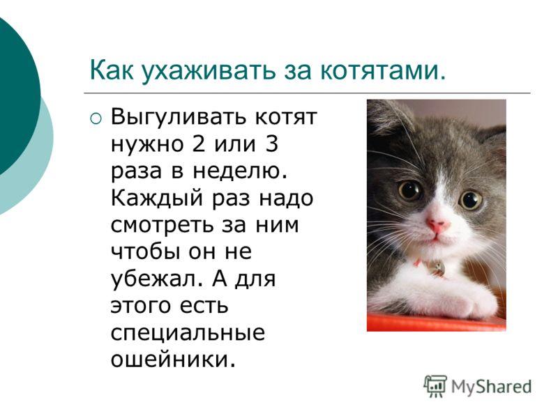 Котята, остающиеся дома на полный рабочий день