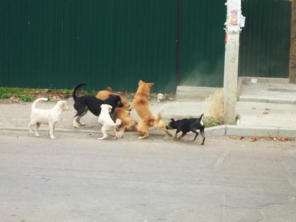 Что делать при встрече со стаей бродячих собак?