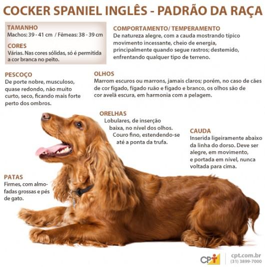 Собака сеттер: описание породы, характеристика навыков, условия содержания, виды