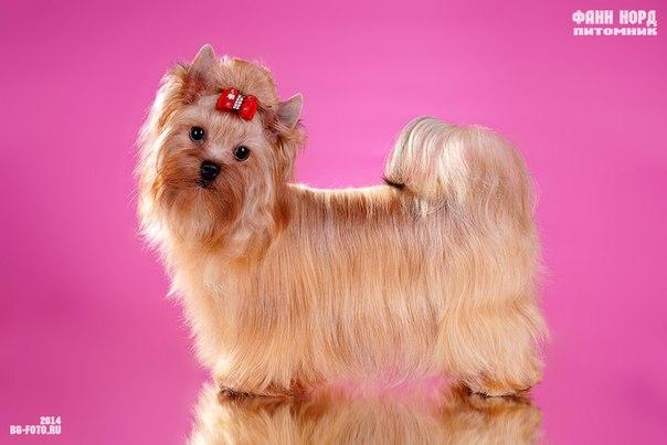 Русские породы собак русалка