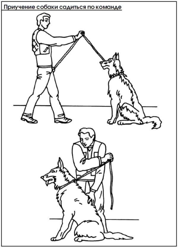 Как научить собаку команде «лежать!» в домашних условиях. техника дрессировки щенка: как приучить и обучить питомца выполнять указания