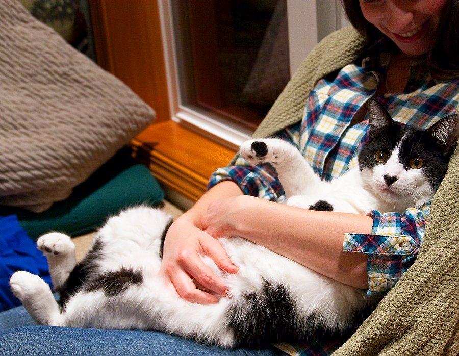 Где в доме любят спать кошки и коты?