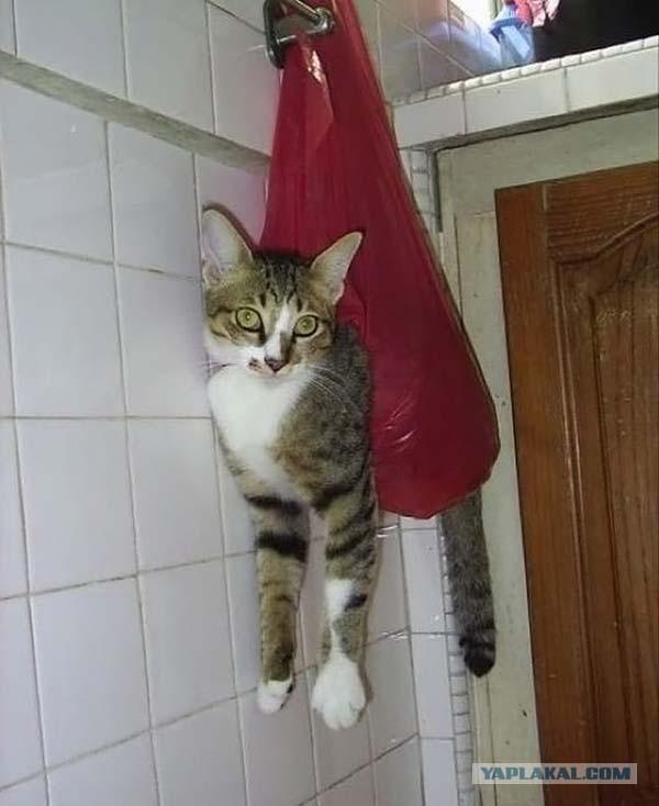 ᐉ советы специалиста: как отучить кота или котёнка писать и гадить в неположенном месте - zoovet24.ru