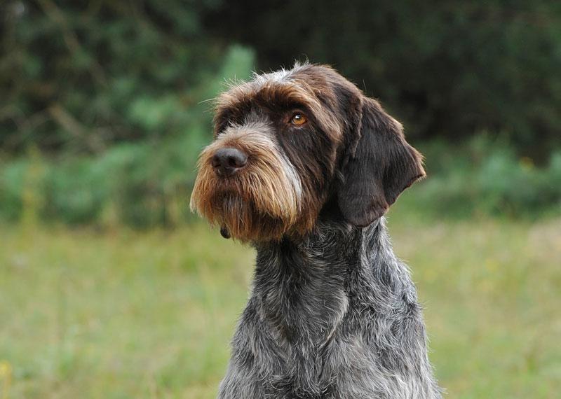 Редкие породы собак. описание, названия, виды и фото редких пород собак | живность.ру