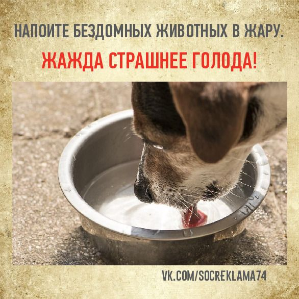 Как помочь домашним животным в жару на supersadovnik.ru