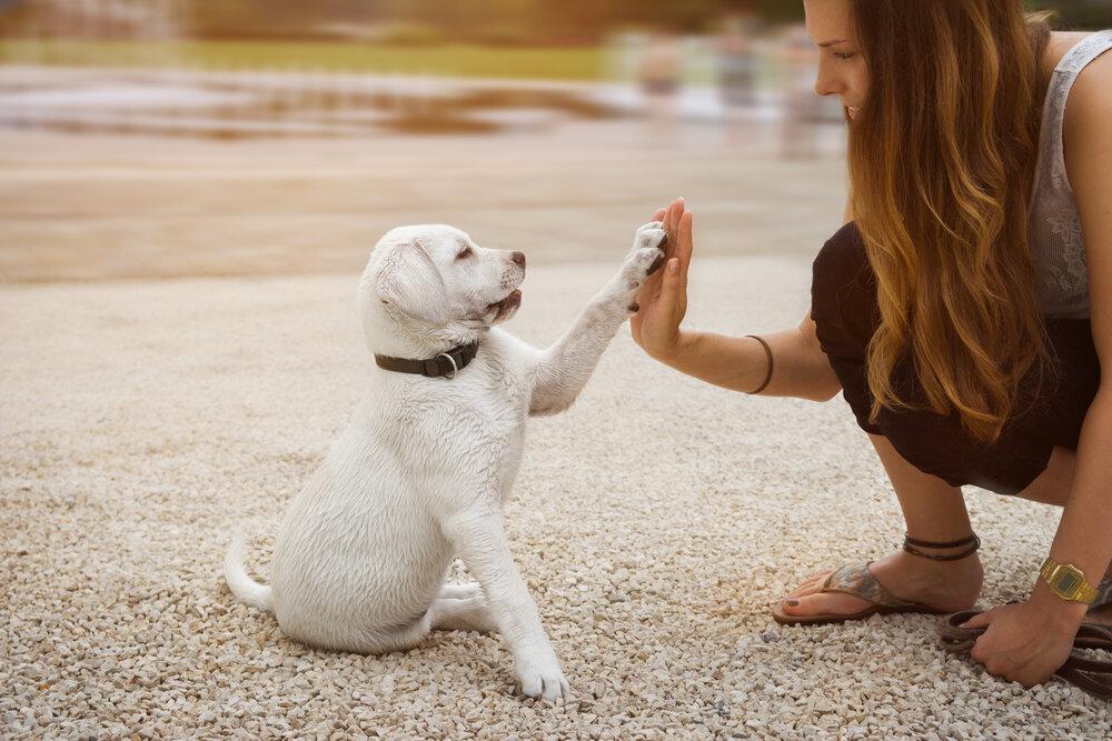 11 пород собак для новичка: лучший первый питомец именно для вас