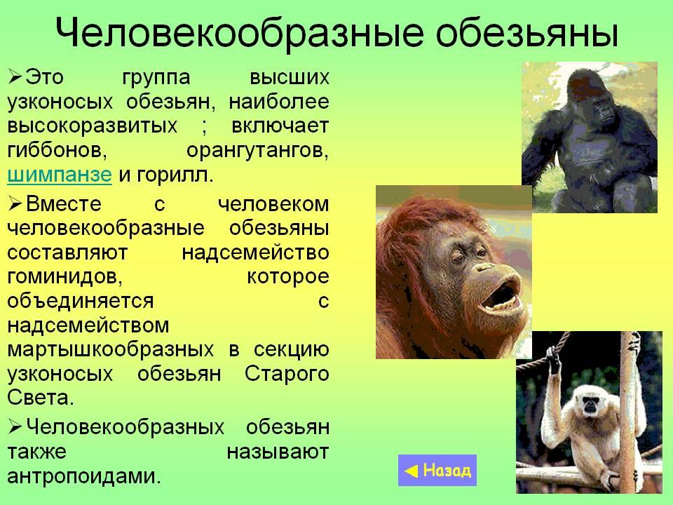 Всё об обезьянах
