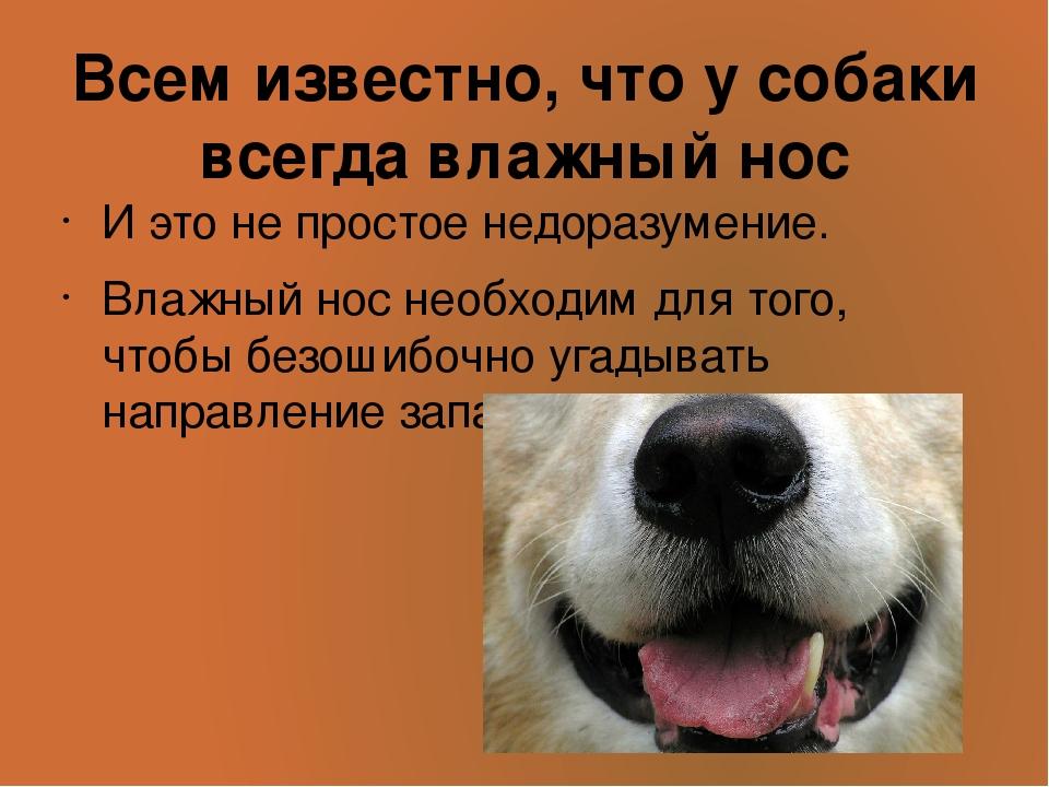Кашель у собак: причины, симптомы и лечение - научная статья центра ответ