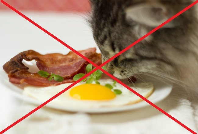 Можно ли кошке или коту сырые продукты?