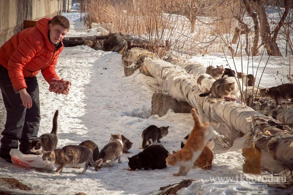 Люкс для кота: где в иркутске оставить питомца на время отпуска the village собрал топ зоогостиниц города