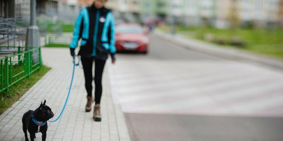 Как правильно выгуливать собаку и сколько?