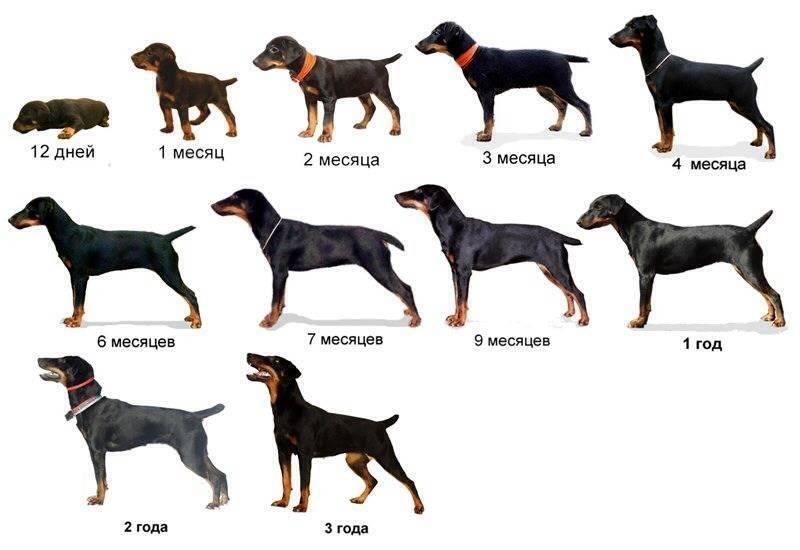 Терьеры - все породы, разновидности, особенности и описание собак
