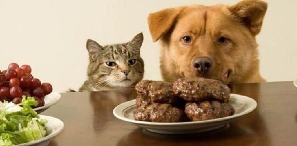 Почему нельзя кормить кошку со стола