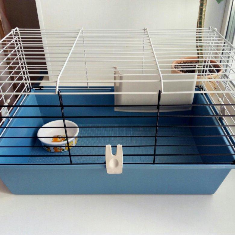 Выбор игрушек для морской свинки и изготовление своими руками