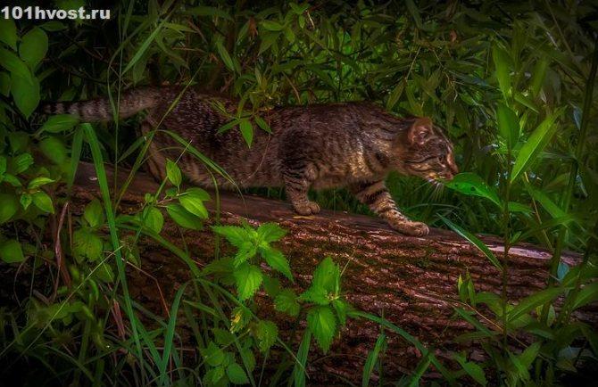 Поиграем в кошки-мышки — обзор пород крысоловов