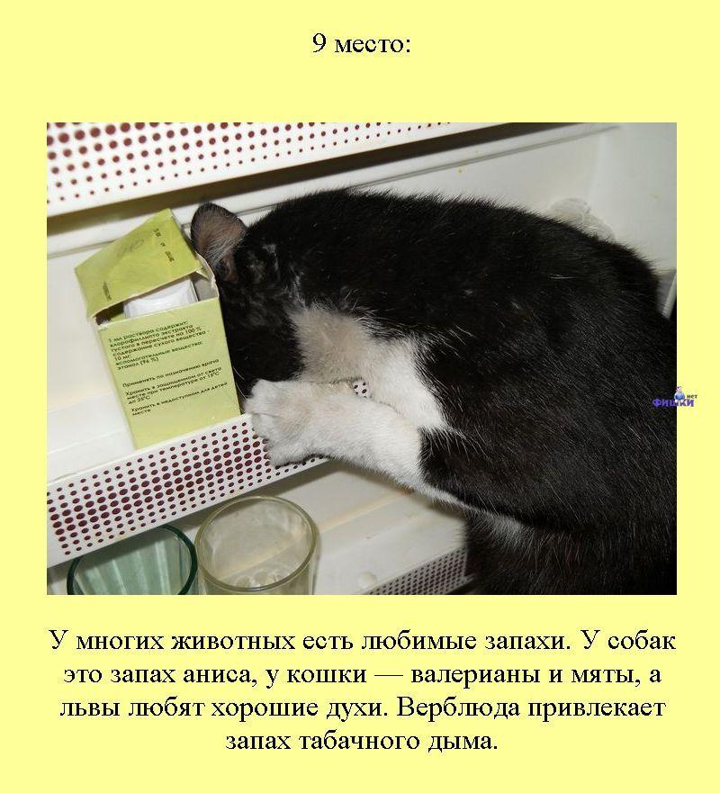 12 запахов, которые не выносит любая кошка: цитрусовые, парфюмерия, бытовая химия, дым
