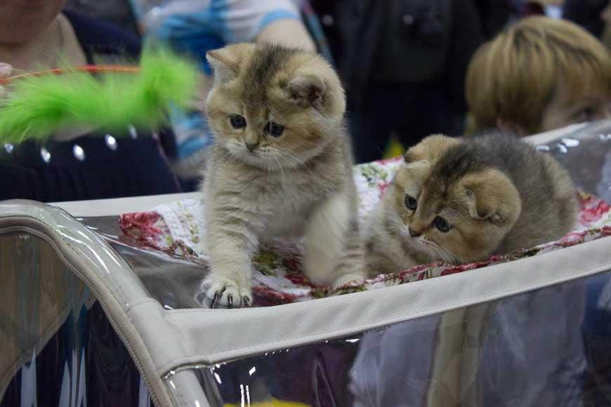 Как правильно выбрать здорового котенка и где его лучше купить?