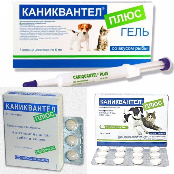 Квантум глистогонный препарат для собак - ваш лечащий врач