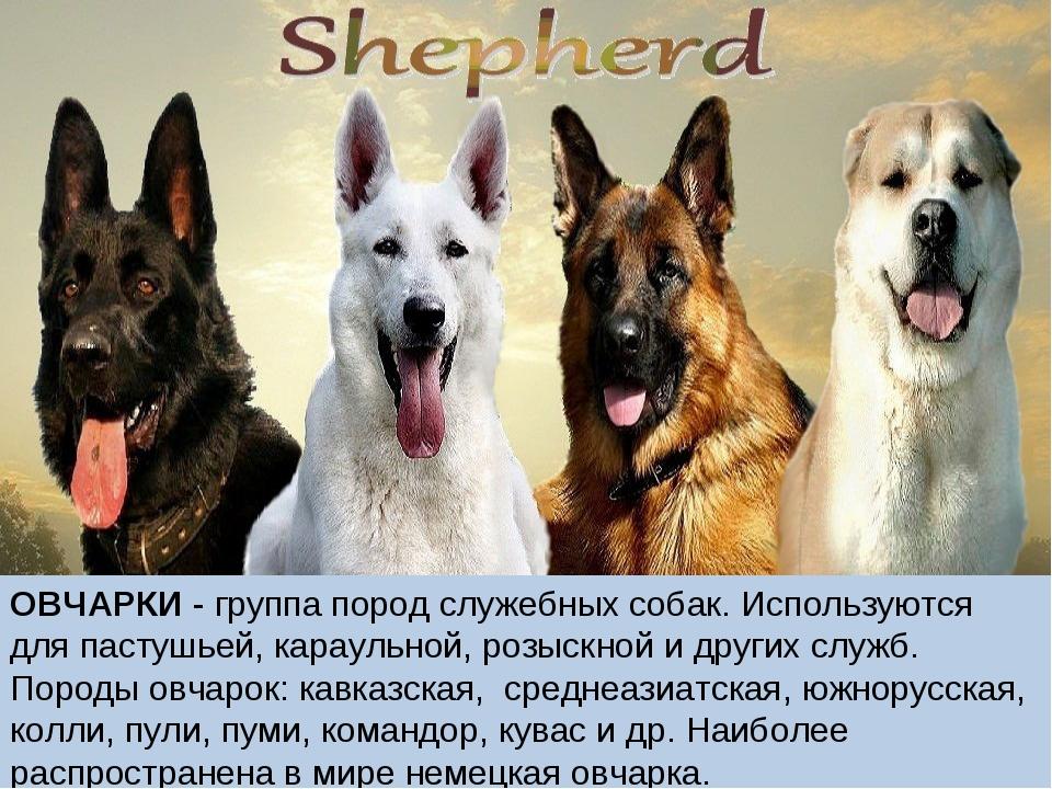 Служебные собаки: фото, породы, виды, содержание, кормление