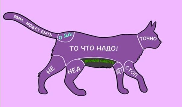 Как гладить очень нервную кошку - wikihow