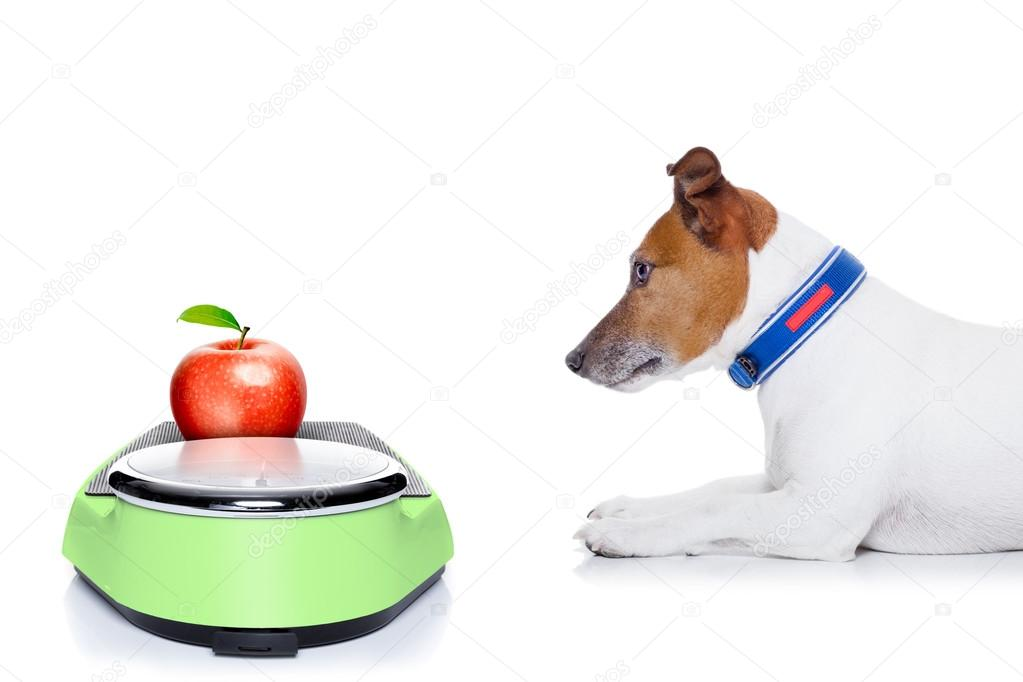 Диета для собак при ожирении