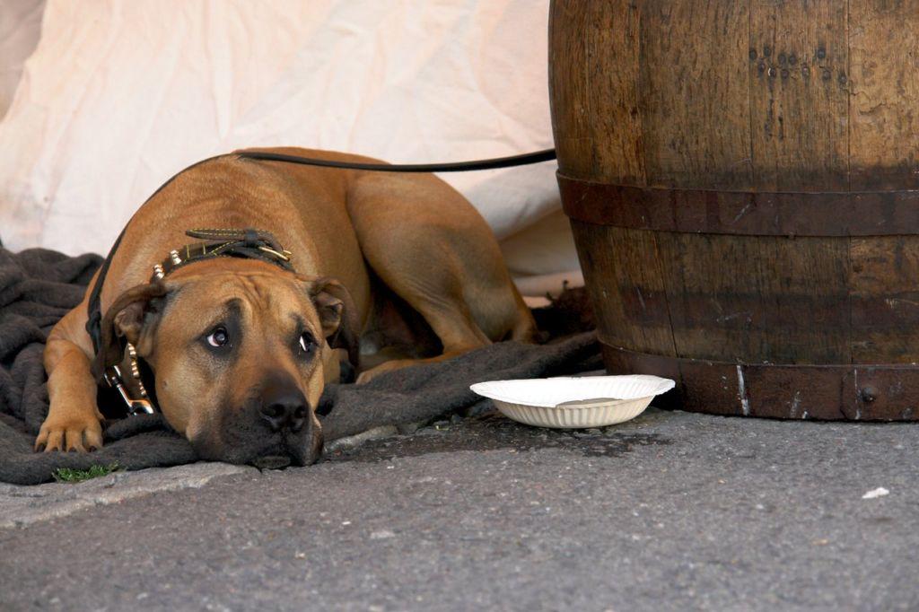 Чумка у собак: виды, симптомы и лечение