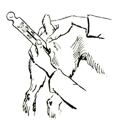 Как измерить температуру собаке в домашних условиях