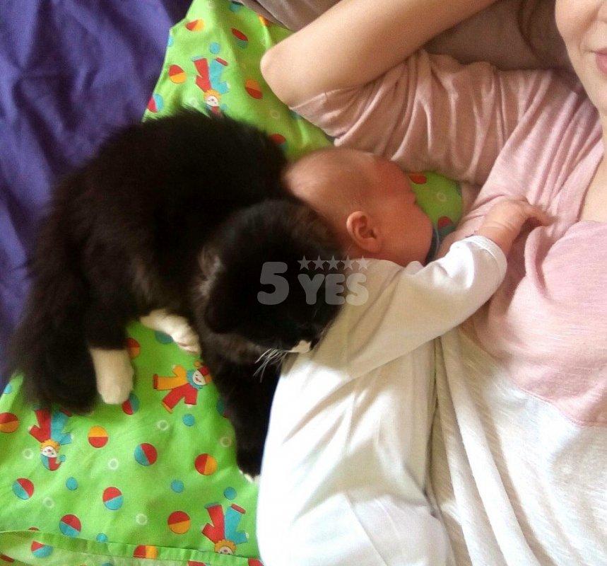 Можно ли спать с кошкой - плюсы и минусы
