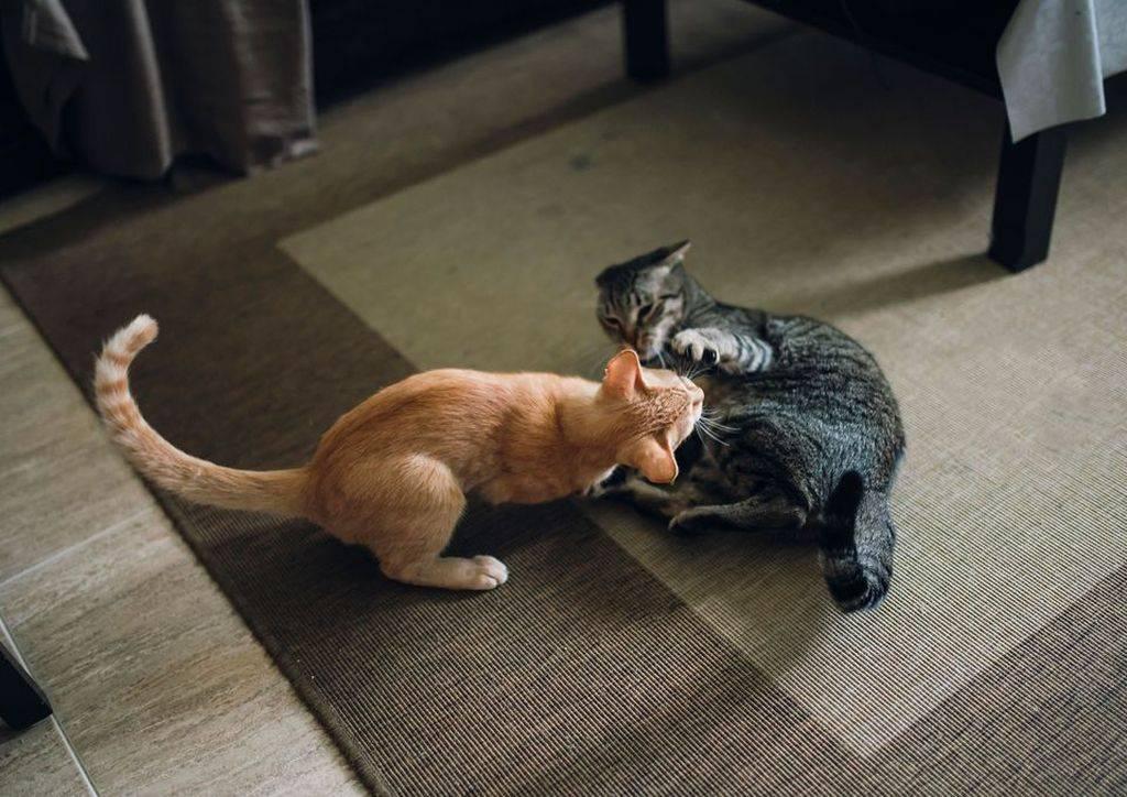 Я — зоопсихолог и знаю, почему ваша кошка так себя ведёт — wonderzine
