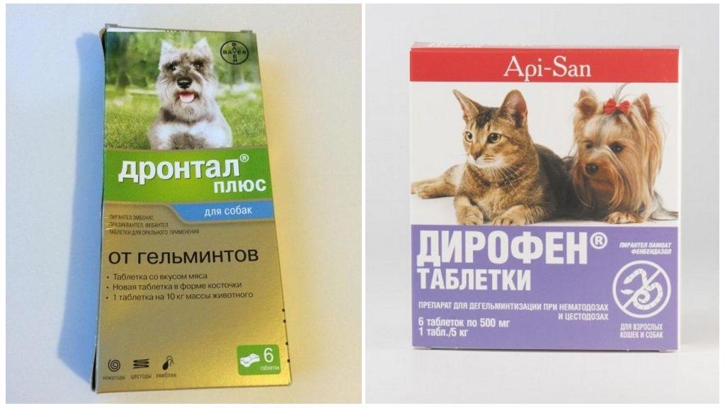 Глисты у щенков: полезные знания для владельца
