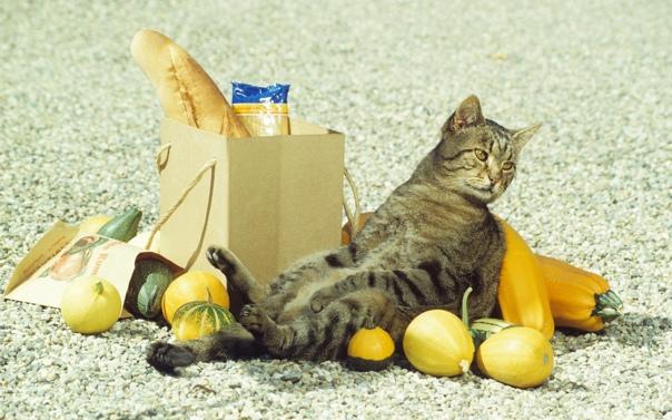 Почему кошка трясет хвостом когда хочет есть